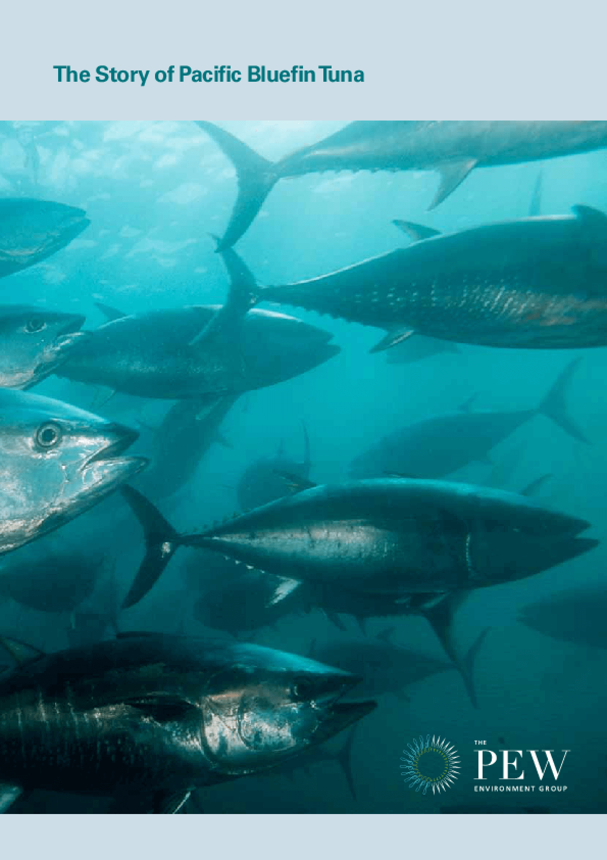 The Story of Pacific Bluefin Tuna
