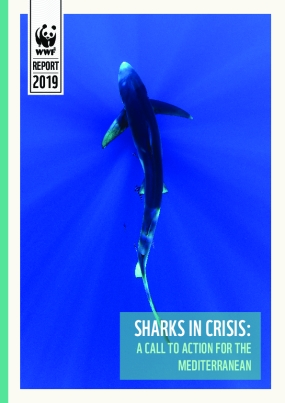 Sharks in Crisis: A Call to Action for the Mediterranean